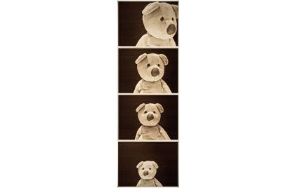 Teddy On The Go - Profile